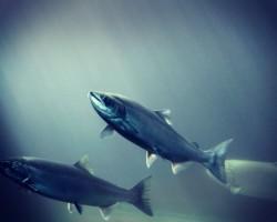 الاستزراع المائي من منظور اقتصادي