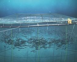 وثائقي الاستزراع المائي
